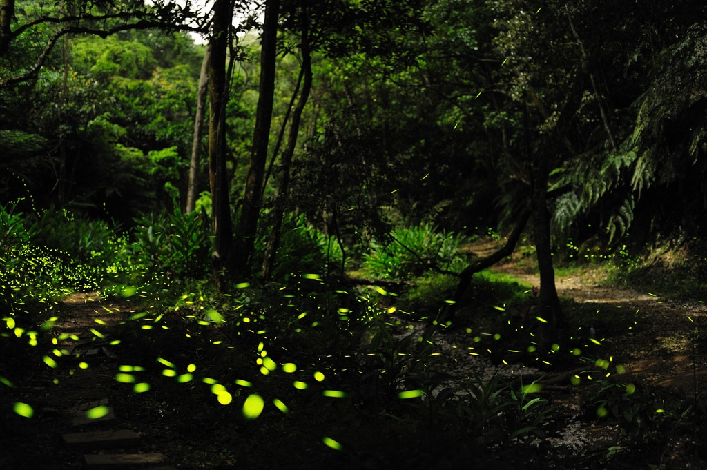 Vem aí uma caminhada na Serra de Sintra à luz dos pirilampos