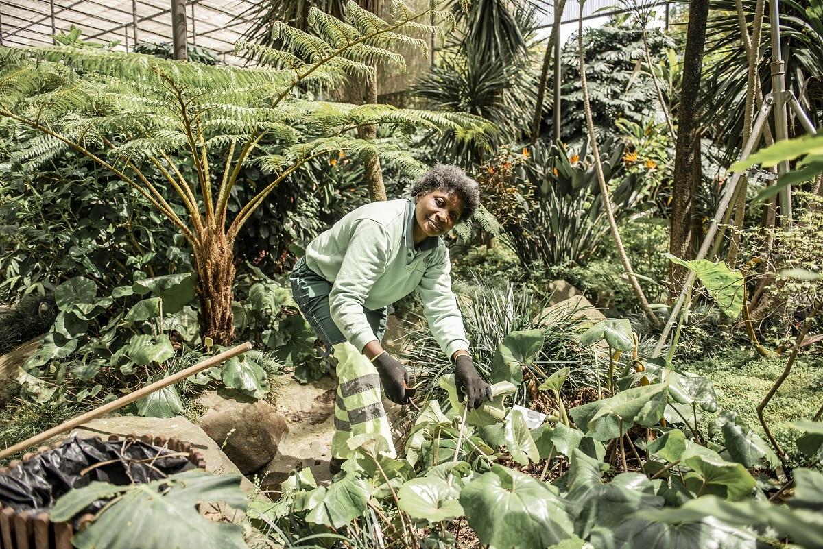 Jardineiros Estufa Fria de Lisboa