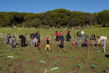 plantação de 21 mil árvores em lisboa