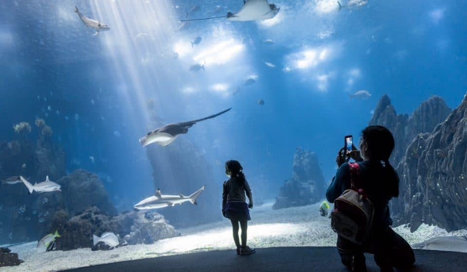 Oceanário oferece entradas grátis a menores de 12 anos no mês de junho